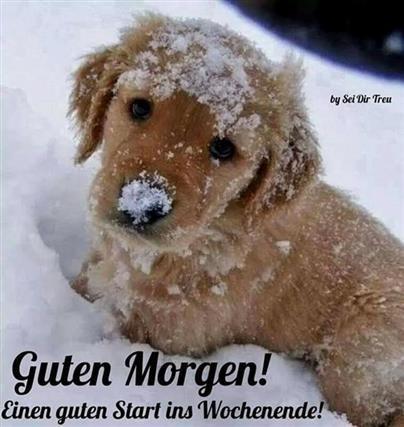 Bilder Guten Morgen Im Schnee Gb Bilder Gb Pics