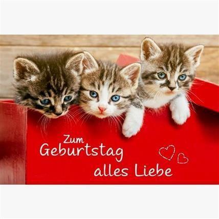 Katzen Geburtstag Karte Grusskarte Wahrer Freund 16x11cm 1 2 3