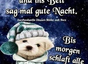 Photo of gute nacht bilder lustig kostenlos downloaden