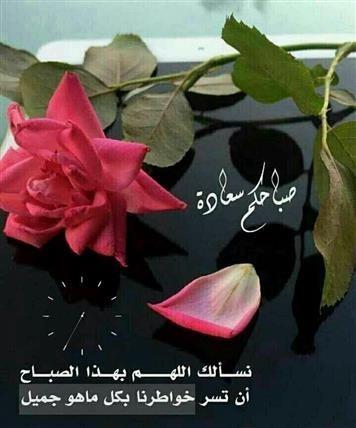 Guten Morgen Bilder Auf Arabisch Gb Bilder Gb Pics