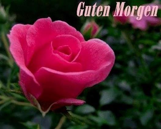Guten Morgen Bilder Fürs Handy Gb Bilder Gb Pics