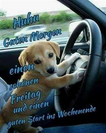 Guten Morgen Bilder Hunde Lustig Gb Bilder Gb Pics