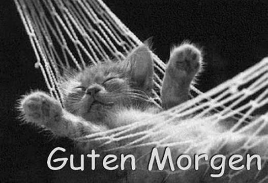 Guten Morgen Bilder Katzen Gb Bilder Gb Pics