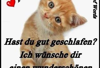 Photo of guten morgen bilder lustig