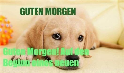 Guten Morgen Bilder Mit Hunden Gb Bilder Gb Pics