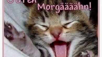 Guten Morgen Bilder Mit Katzen Archives Gb Bilder Gb