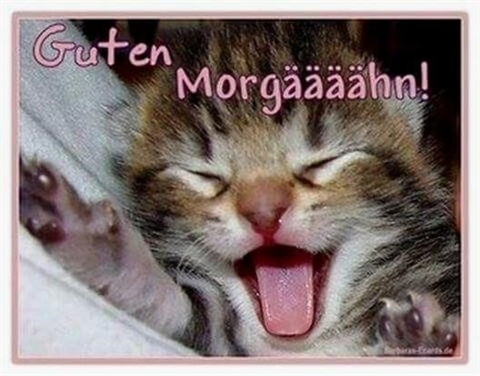Guten Morgen Bilder Katzen
