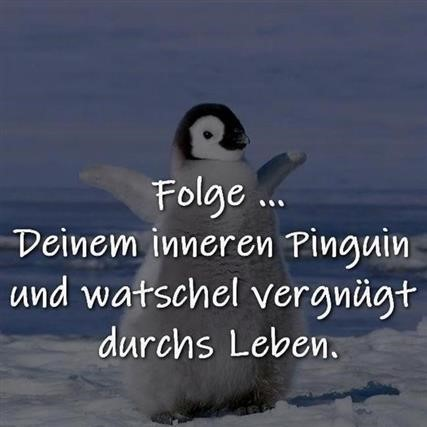 Guten Morgen Pinguin