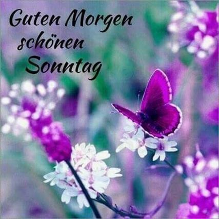 Guten Morgen Bilder Sonntag Kostenlos Gb Bilder Gb Pics