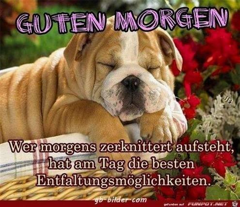 guten-morgen-lustige-bilder-und-sprüche_6