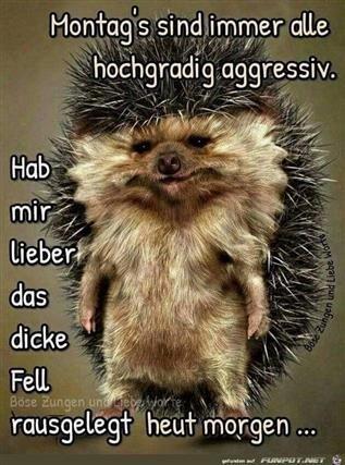 Guten Morgen Montag Bilder Witzig Gb Bilder Gb Pics