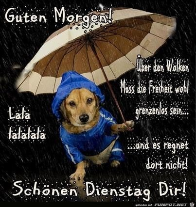 Guten Morgen Regen Bilder Kostenlos Gb Bilder Gb Pics