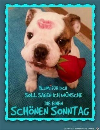 schönen-sonntag-bilder-für-whatsapp_34