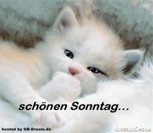 schönen-sonntag-bilder-für-whatsapp_8