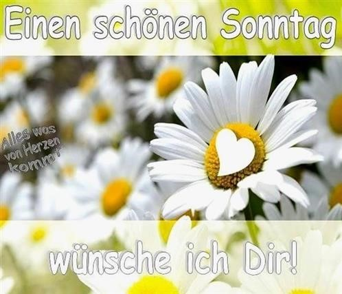 whatsapp-bilder-sonntag_6