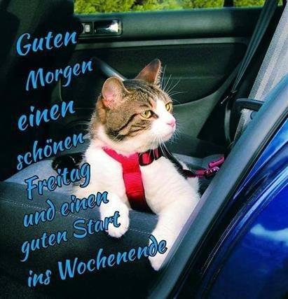 guten-morgen-lustige-bilder-freitag_26