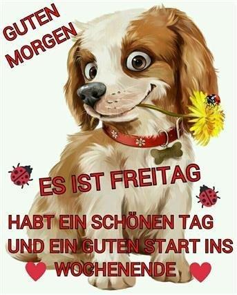 guten-morgen-lustige-bilder-freitag_5