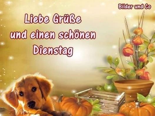 Schönen-Dienstag-Bilder_9_f038b