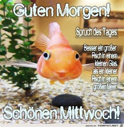 mittwoch-lustige-sprüche_14