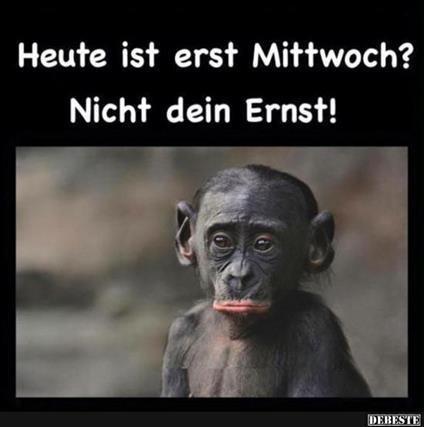 mittwoch-lustige-sprüche_3